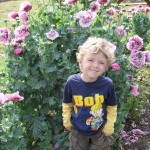 Caleb amongst the papaver somniferum