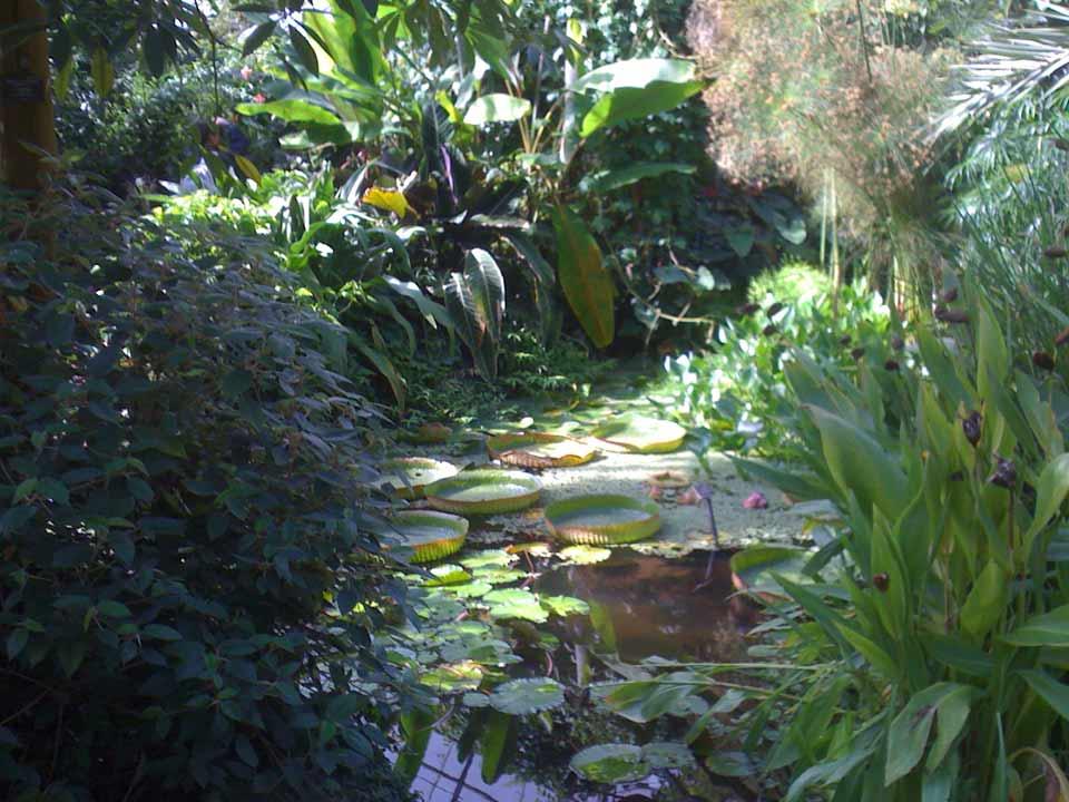 pgg-dundee-botanic-gardens-aug13-02 | PGG