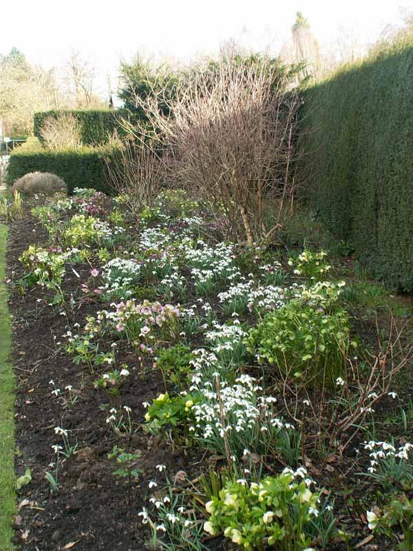Pgg Visit To Broadview Gardens Feb 2014