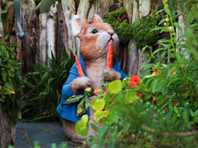 The Peter Rabbit Garden