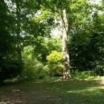Evenley Wood, Northamptonshire May 2011