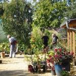 PGG visit to Pan Global Plants