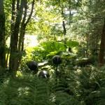 PGG visit to Stone Lane Gardens