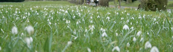 Snowdrop Study Day at Shaftesbury's Snowdrop Festival