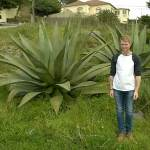 Danny Ainscough, our tallest student on the trip, stood next to a giant Agave.