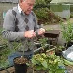Peter Catt of Liss Forest Nursery giving a grafting demo