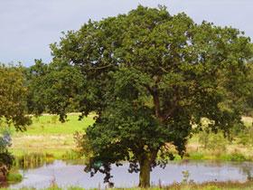 Cherry Tree Arboretum, Shropshire