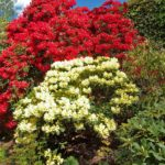 PGG visit to Branklyn Gardens Perth 14 May 2016