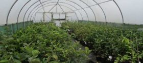 Yorkshire Plants