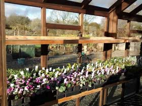Rumbling Bridge Nursery, Rumbling Bridge, Kinross