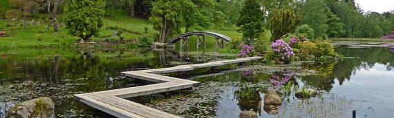Photos: Japanese Gardens & Rumbling Bridge Nursery June '19