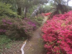 Five Gardens in Kerry